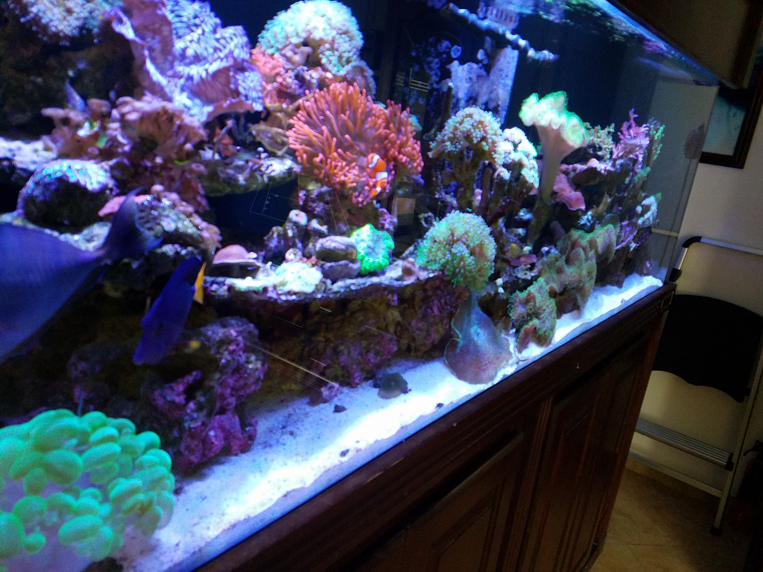 Orange County Reef Care Aquarium Service Maintenance