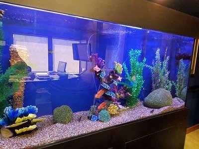 Aquarium Service Aquarium Leasing And Maintenance